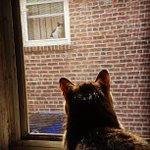 Cant tell if my cat has a nemesis, or a tragically distant love interest. . http://t.co/DWfTcAgV7M