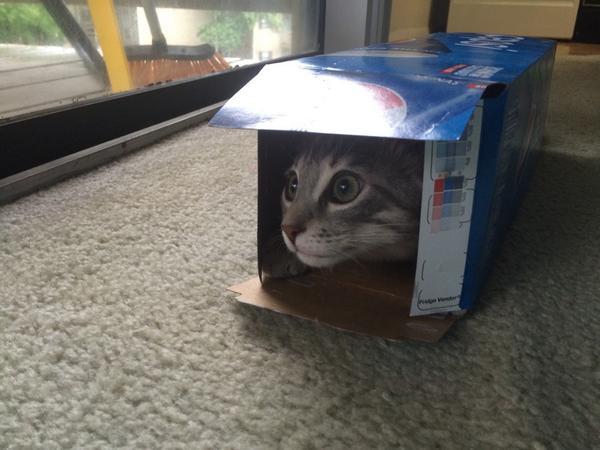 I think @pepsi needs a spokes-kitty... http://t.co/qK96hzrshY