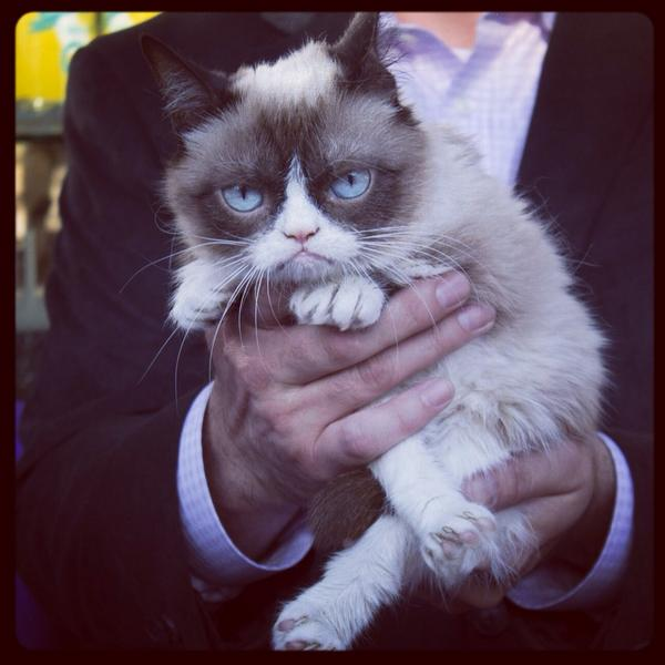Are you guys ready to meet Grumpy Cat @thelinq in Las Vegas? We are sooo EXCITED! Doors open at 6pm, Arrive early!