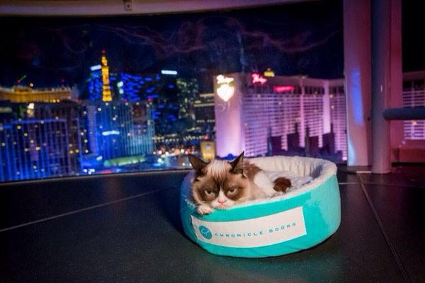Tonight, we had @RealGrumpyCat ride on @HighRollerVegas and she hated every second of it. http://t.co/LBcdaW7E2B