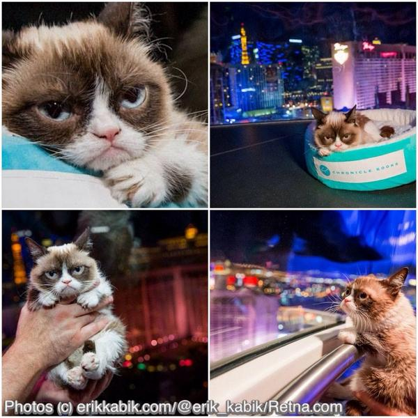 @RealGrumpyCat took a ride on The @HighRollerVegas @TheLINQ in #vegas tonight! pix @ http://t.co/ldBukkQnKP http://t.co/eozQVEnpdR