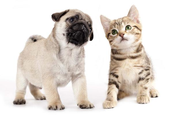 Like pug dogs & kittens? We are recruiting a worldie acc mgr 4 our social team. rts loved http://t.co/INetbXYxKu http://t.co/YPmJGHFhOH