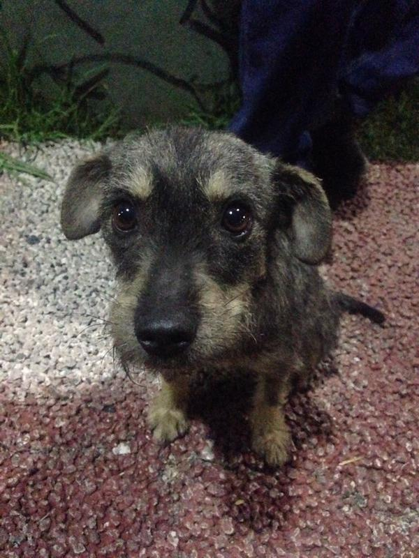 Me acabo de encontrar esta perrita, es dulce y noble. Está en los huesos. RT para encontrarle hogar cc @Monicucha http://t.co/GuRy8fY801