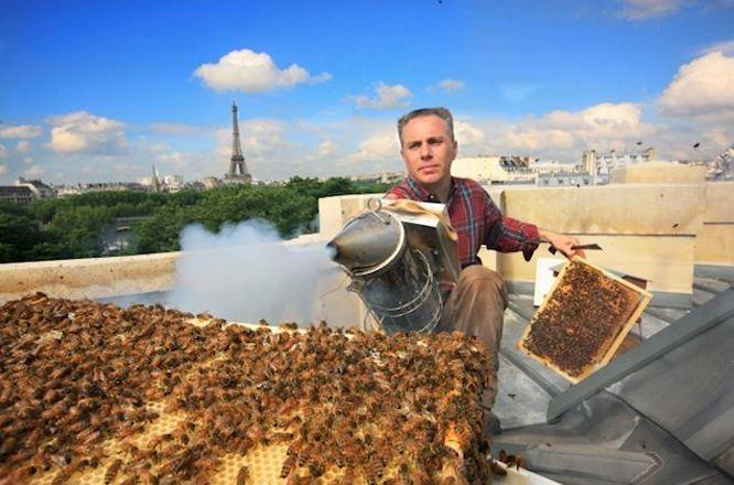 #Dakpotentieel van Parijs' #erfgoed benut door #dakimkers @realSparkOne @bijenlint @HermansHoning #reddebij http://t.co/kS9y6ZywGd