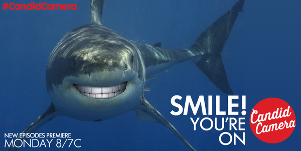 Sharks, they're just like us... Smile #SharkWeek, You're on #CandidCamera! http://t.co/D7WK715Ajs