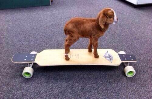 He was a skater goat, she said see you later, goat: http://t.co/TWu9w9HDwL