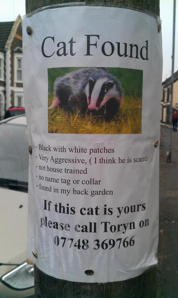 Errr.... Lost cat? In Roath... http://t.co/O1FY9VkPlb
