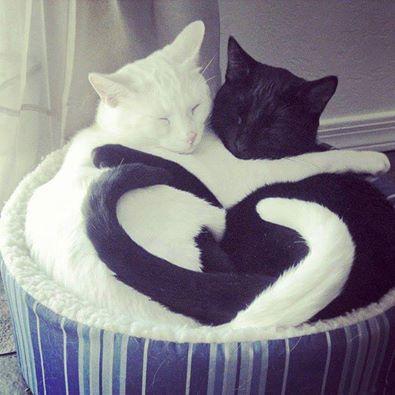 Yin & Yang http://t.co/fbOjvNzzOK