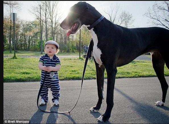 Yoğun gündeme bir dakika mola... Küçük adamın büyük dostu! http://t.co/HtzPGuVqq1