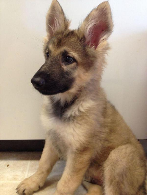 those ears! http://t.co/oV1HZlhuxs