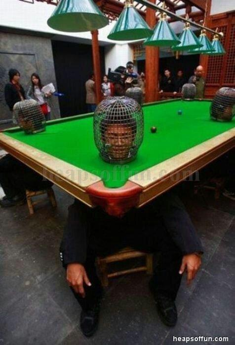 For weird snooker pix, this is up there MT @snookerloopyno1 @SHendry775 @alan_mcmanus @MichaelaTabb @WorldSnooker1 http://t.co/hNMEvVuPH6