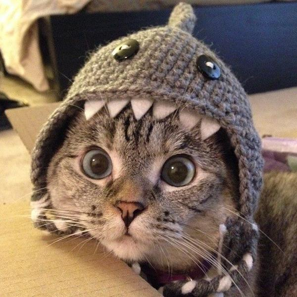 #SharkWeek http://t.co/QjOjSPAnqe