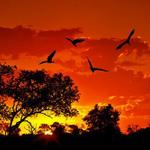 Amazing sunset Africa http://t.co/T3oIhASHYb