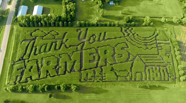 """See the larger than life Thank You to farm families w/ the """"Thank You Farmers"""" corn maze in Tracy, MN. http://t.co/rmKyYLkTDT"""