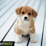So nice! Lovely this puppy! RT@UberFacts Happy National Dog Day! https://t.co/IKq739ula9