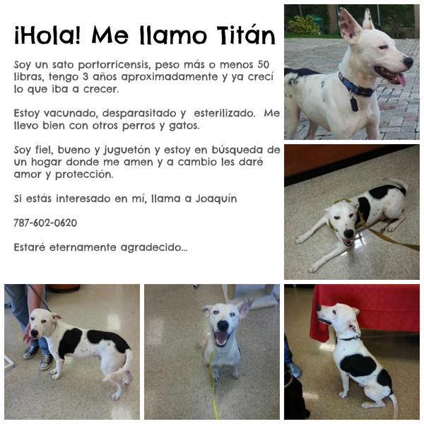 Dale RT por favor. Gracias. Titán quiere su forever home #Adoptanocompres #adoptaperro #perro http://t.co/ZaZFYSF7dH