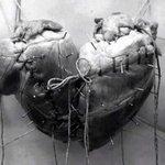 La forma tan conocida del corazón que dibujamos, se debe a la unión de dos corazones. http://t.co/2mweG9Y1IX