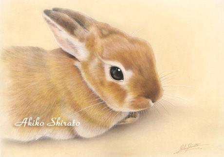 しらとあきこ (@akipcs): 少し前に描いた絵だけれど、とても気に入っている一枚(肖像画・個人蔵)。私は動物は眼から描いていくのですが、眼がうまくいくともう6割完成した気持ちになります(*^^*) http://t.co/LwSCQZRy4e