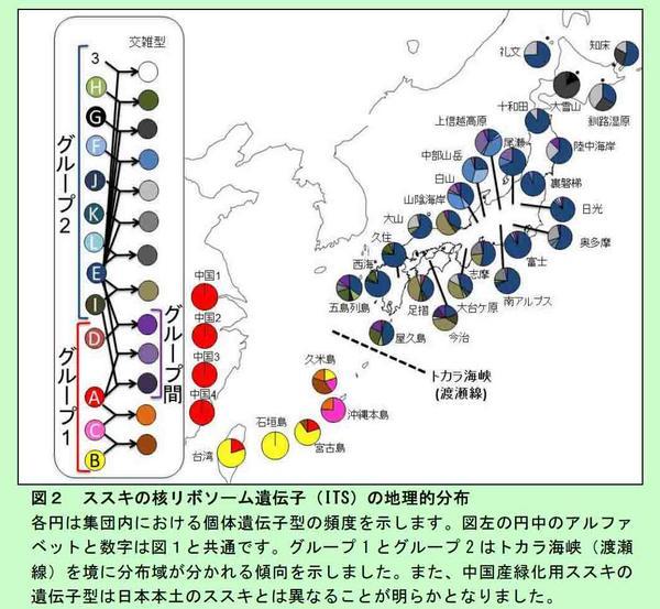 日本在来のススキと中国産のススキは遺伝的に異なる(25年度農環研研究成果) http://t.co/6gFX68nYQa 国立公園などでの緑化においては在来植物への遺伝子かく乱の可能性がある。 http://t.co/QghvSeb2KW