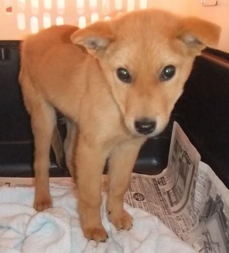 広島土砂災害:殺処分寸前だった救助犬「夢之丞」1人発見 http://t.co/VTepZybja9 生後3〜4カ月…夢之丞は、広島動物センターのガス室前にぽつんと置かれたケージの中で怯えていた。 人間に殺されかけたワンコが人命救助… http://t.co/x3lwWzvkD3