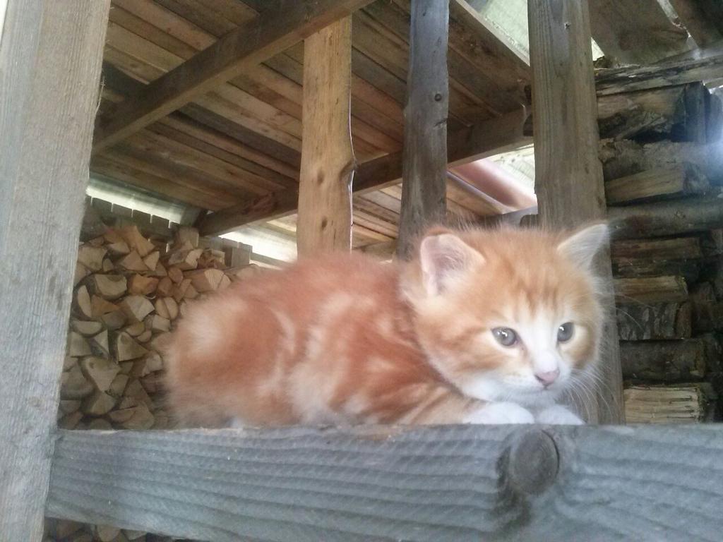 Dāvinām šo mazo jaukumu - kaķēnu - labiem cilvēkiem. Zvani 26389396. http://t.co/fg0uHF2C4O