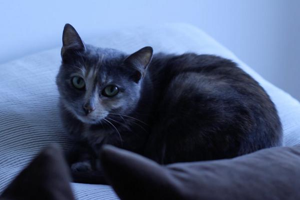 [RECHERCHE] Si vous êtes au Plessis Robinson, je recherche ma chatte qui est tombée de mon balcon, merci. http://t.co/TwWe9IPNYJ