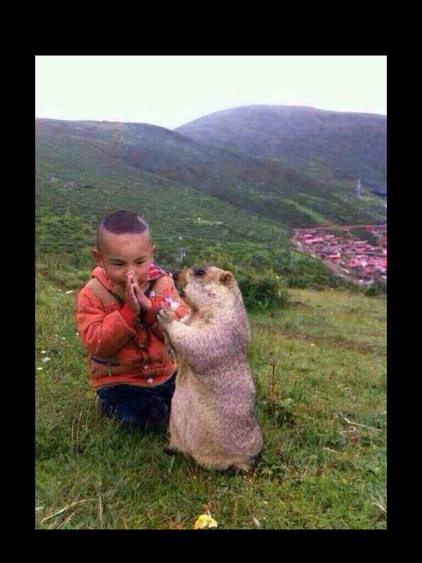 チベット仏教の思想は動物まで伝えわっている気がする。可愛くて見るだけで平和を感じさせる。 http://t.co/d6vCAZkVE0