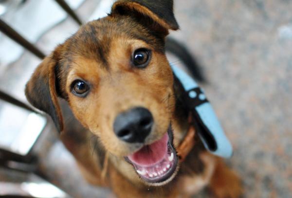 ¡Es impresionante la transformación de un perrito abandonado cuando recibe amor! #Adopta #Colabora #Difunde http://t.co/e97rfa3OK1