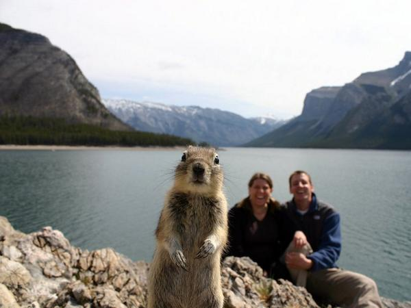 Even squirrels know how to photo-bomb.  http://t.co/6strcBPvMg http://t.co/kJcMgqOnfd