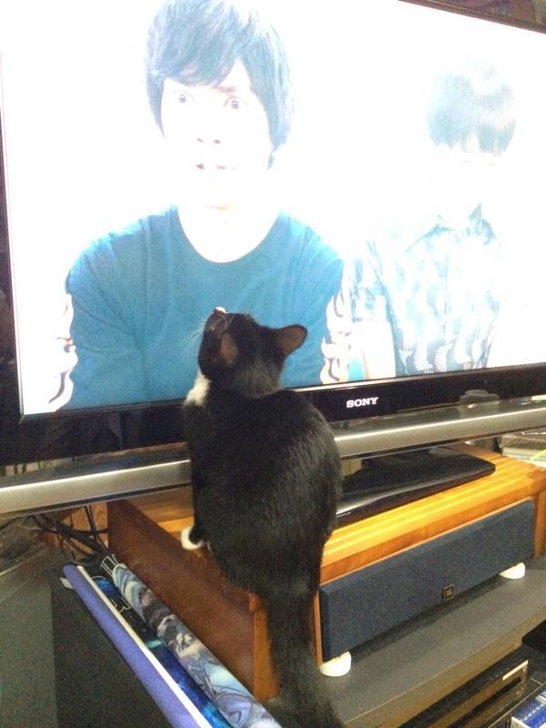 うちの猫がホノオくんに釘付け! #アオイホノオ http://t.co/d69abvBNqo