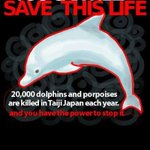 RT @jilleeeebean: THE COVE: PLS SIGN & RT PETITION HELP SAVE JAPANS DOLPHINS TY #OpKillingBay #tweet4taiji http://t.co/SVYRsnG8iw … … http://t.co/QaOl7QJPav