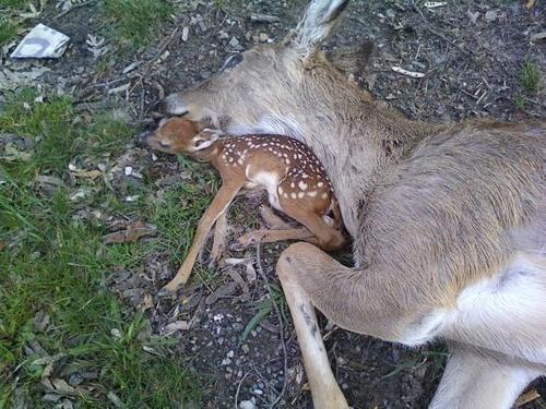 """@meryhudson777: ""@Miranda210213: @AMOUNARBOL (bebé durmiendo al lado de mamá muerta) http://t.co/qVhvb0yUvs"""" ay no, que triste"