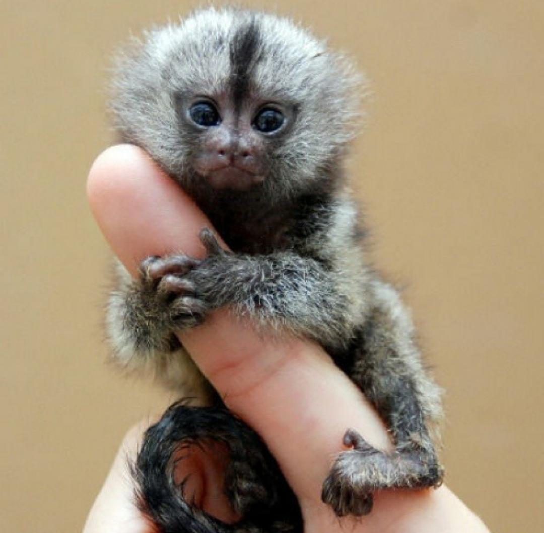 Finger Monkey http://t.co/gvbsDlG8vs