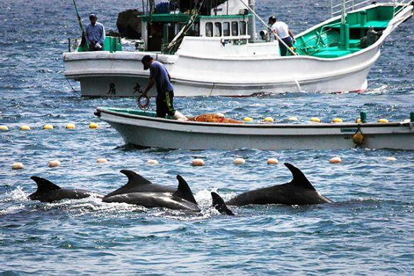 Dolphin killing at #TheCove is about to begin. Take action: http://t.co/owtnIIXGcZ  #Tweet4Taiji #Tweet4Dolphins http://t.co/n71KPK3DSi