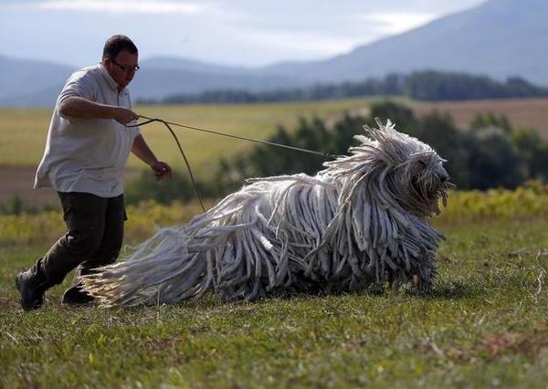 最初モップ投げてるのかと思って、よく見たら犬で、手入れされてない犬だと思ってたらむしろものすごく手入れが必要なタイプの天然ドレッド犬だったとは…あと思った以上にでかい。 http://t.co/1zSbkRoDxP