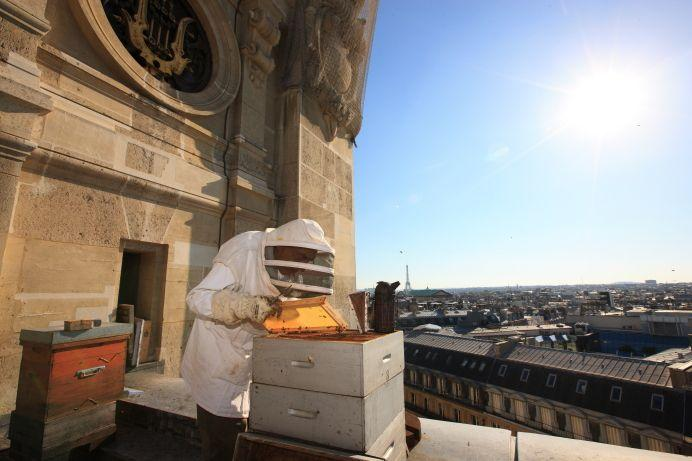 Plan #Bee voor #bijen: creëer ruimte op #daken en #reddebij @natuuronline @UITJEEIGENSTAD @realSparkOne @IVNNederland http://t.co/gGZcBTrgJU