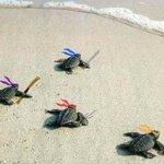 """""""@sabiastuque_: La prueba de que las tortugas ninja existen http://t.co/h6r92WsxrK"""""""