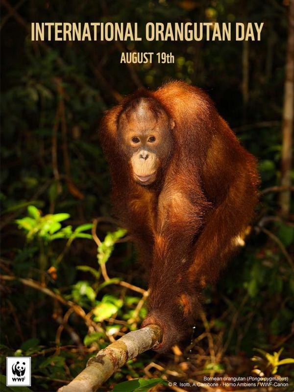 Selamat Hari Orangutan Sedunia! | Komitmen Indonesia untuk Orangutan  http://t.co/td1B1n1Nwo. #OrangutanDay http://t.co/RsxTM1vJai