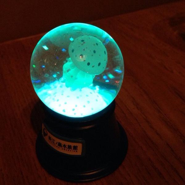 しらとあきこ (@akipcs): 江ノ島水族館で買ったちいさいクラゲスノードームがいろんな色に光ってとてもカワイイ。なのに売り場では光ることを一切おしらせしていないという…この愛らしさはもっとアピールすべき…! http://t.co/BNy2hI47HS