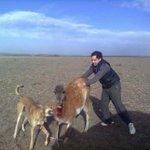 @paislobo Sujeto hace que perros ataquen a guanaco y sube fotos a redes sociales ->http://t.co/8zElxthVl5 http://t.co/ewtsE5NPYf /REPUDIO