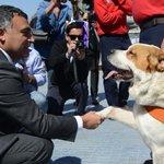 "RT @biobio: Maipú rescató perros abandonados para convertirlos en brigada de seguridad ""quiltra"" http://t.co/dCo8NLBuas http://t.co/f5Mjl0qL1h"