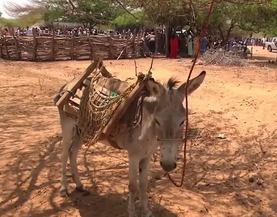 VIDEO | La sequía angustia al departamento colombiano de La Guajira http://t.co/nE2bfqoNT0 http://t.co/vZGwrZIjTh