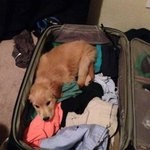 Packing for school like http://t.co/2Bc8GJ3fwi
