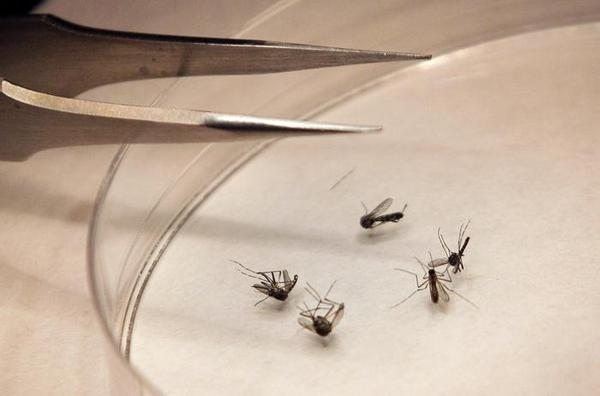 Health officials announce that mosquitoes infected with #WestNile have been found in Roxbury http://t.co/4xG1U3VleY http://t.co/r4D3iJBymI