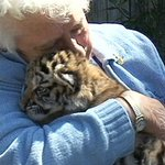 RT @CTVKitchener: A senior from Barrie has achieved her lifelong dream of hugging a Bengal tiger: http://t.co/hQaqvbGHM8 http://t.co/VLs92LcgJk