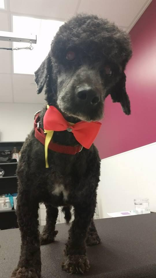 Our sweet senior Manny is still looking for a home. He can't see well but he's a happy, darling #dog! @AdoptNShop http://t.co/fYZfZEChBO