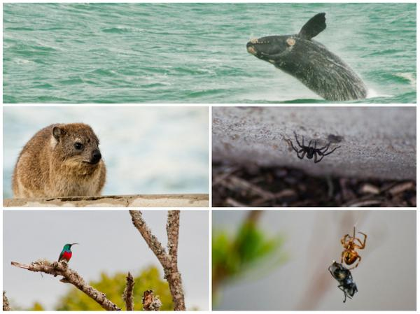 A1: I'm a big wildlife fan, and there's plenty of it around. #discoverOverberg http://t.co/Gc9quIb70y