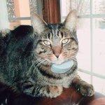"""@TheSpec: Coyote killed Burlington cat in daylight attack #BurlOn http://t.co/e8aUfZzCuM http://t.co/PcDxDRoSTY"" ????"