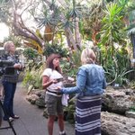 RT @VanDusenGdn: Agnes is ready to go live with @dawnchubai on @bt_vancouver #bloedelconservatory http://t.co/dIG932kb9w