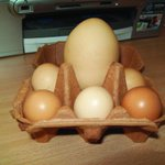 RT @FarmersWeekly: Ouch. Farmers Weekly reader Irene Roberts from East Sussex shared this picture of an egg laid by one of chickens. http://t.co/DBY8ABFoFC